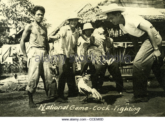 national-game-cock-fighting-